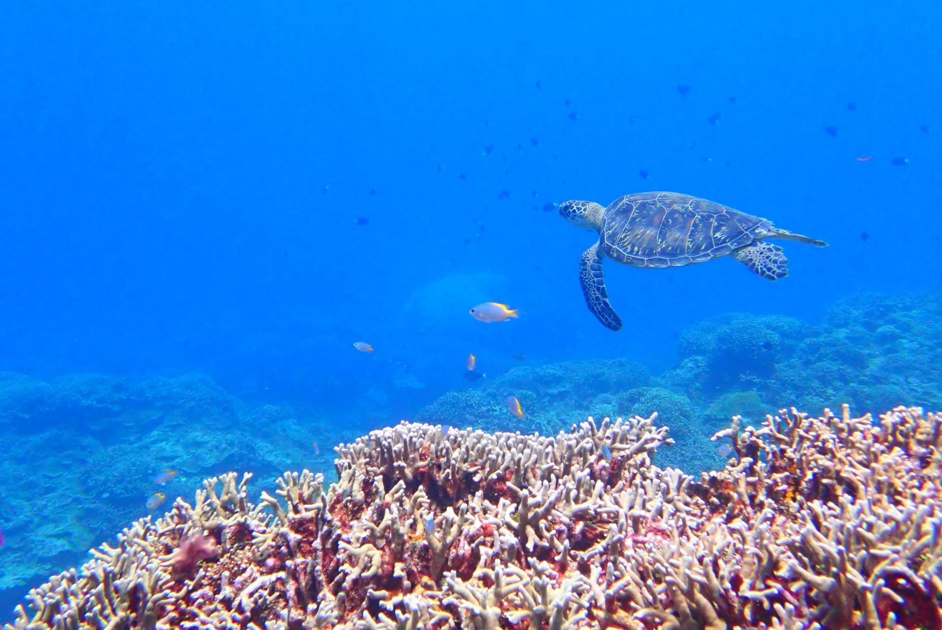 沖縄本島でウミガメの赤ちゃんが海に旅立つ瞬間に遭遇できた!