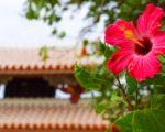 2017年1月 冬の沖縄旅行。5泊6日の格安の旅費を公開!